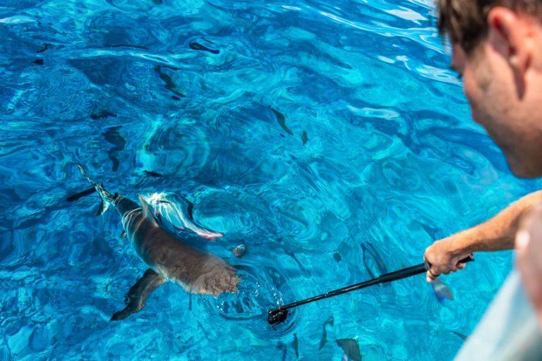 Imagem mostra uma pessoa embaixo d'água tirando uma foto.