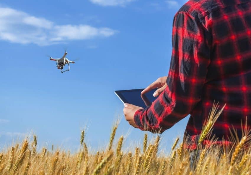 Homem pilotando um drone com tablet em meio ao campo de trigo em um dia com céu azul.