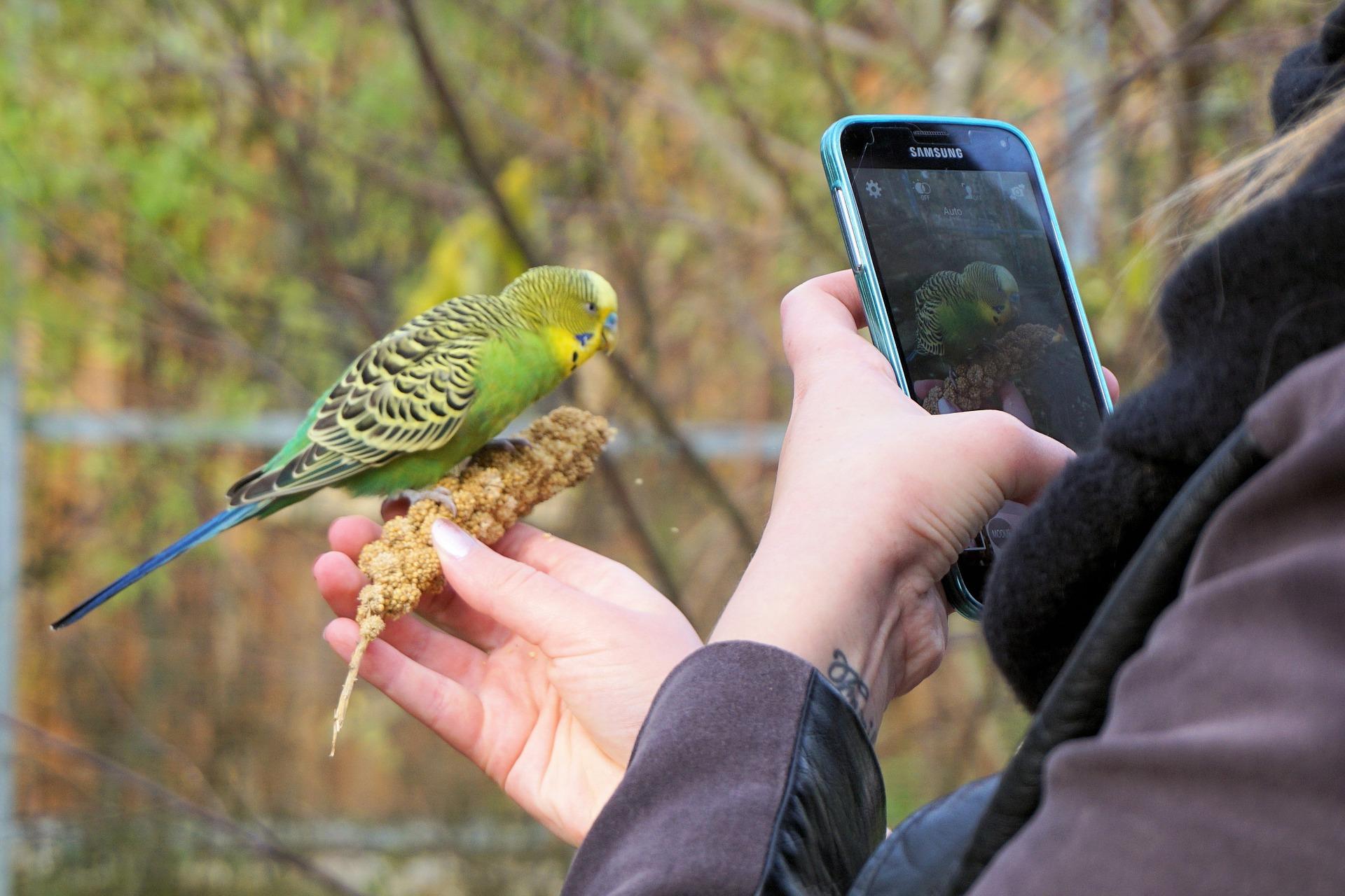 Mulher tirando foto com celular de um pássaro.