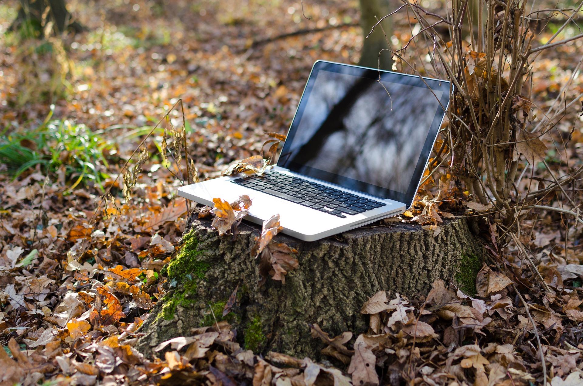 Imagem mostra um notebook em cima de um toco de árvore.